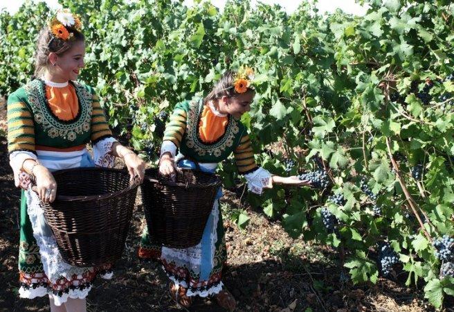 bulgarian grapes