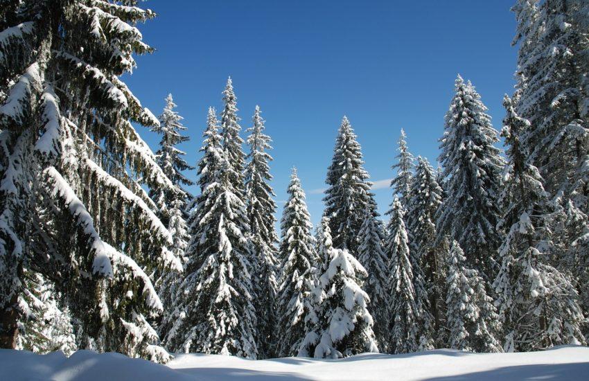 partii ski pamporovo