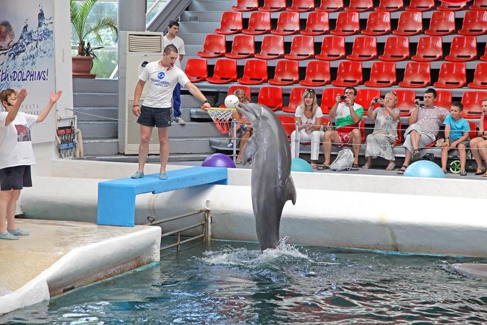 delfinariu varna